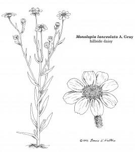 monolopia-bonnie