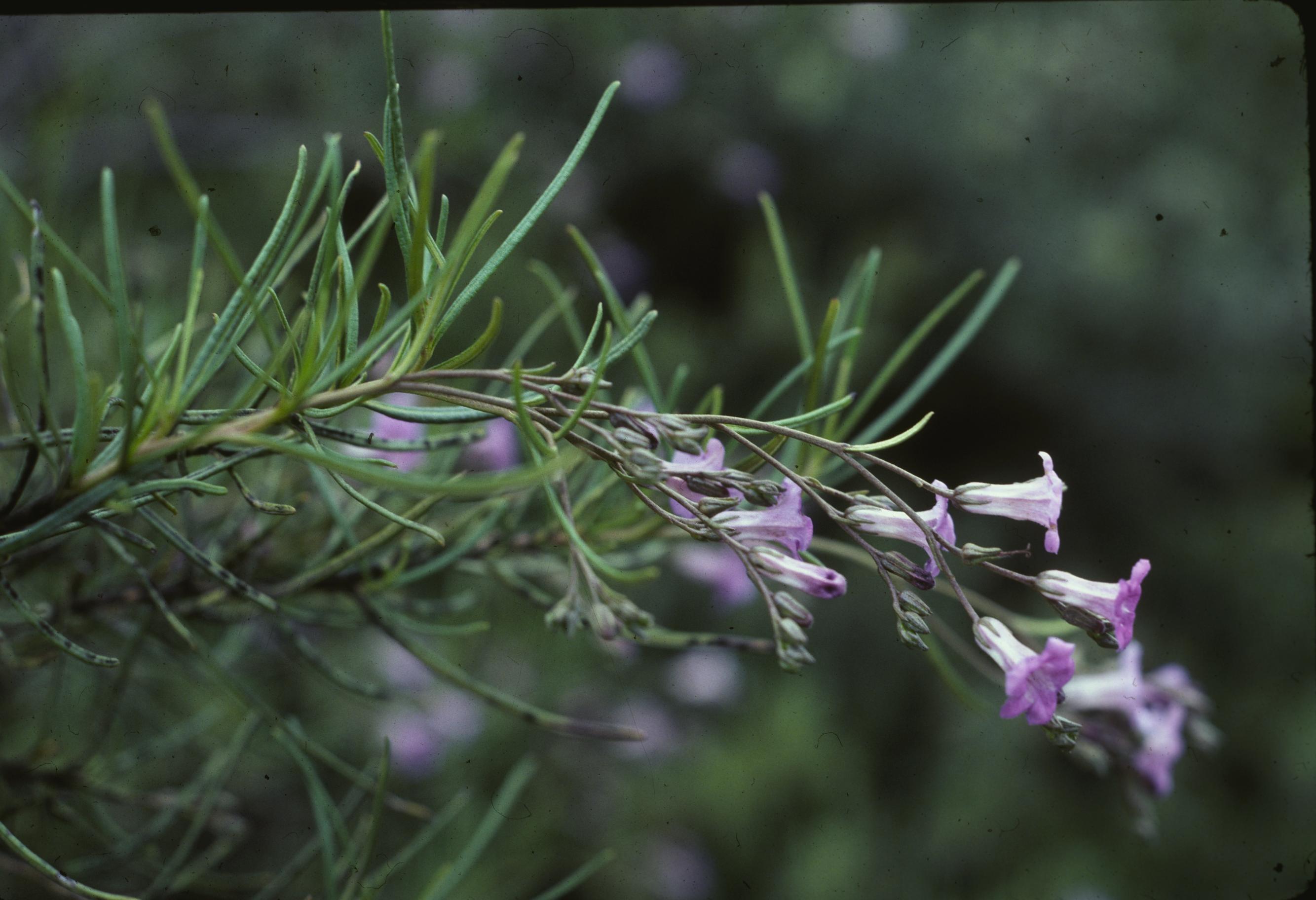 Rare Plants of Montaña de Oro