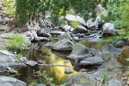 Three Bridges Oak Preserve  project