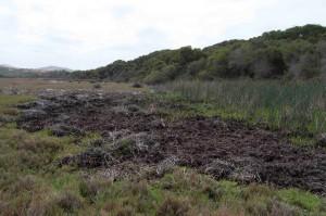 Turri salt marsh
