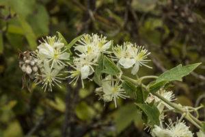 Plants of Coon Creek