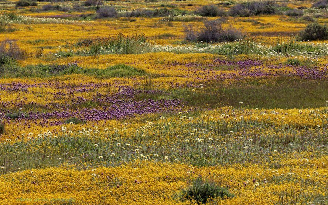 Carrizo Plain April 2006 and more