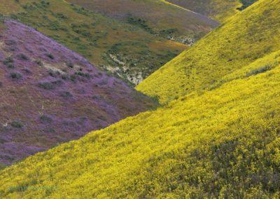 Carrizo Plain Purple and Yellow Hills Richard Pradenas