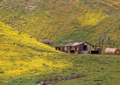 Carrizo Plain Richard Pradenas tin barn