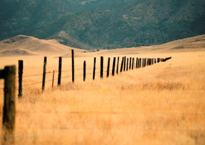 Carrizo Plain Richard Pradenas fence