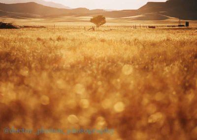 Carrizo Plain Grassland at Sunset Richard Pradenas
