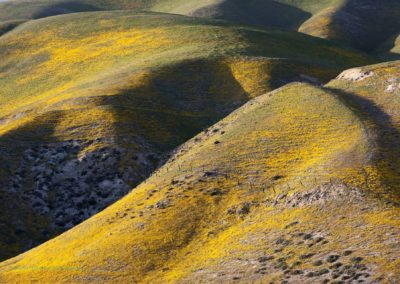 Carrizo Plain Wild Evening Hills Richard Pradenas