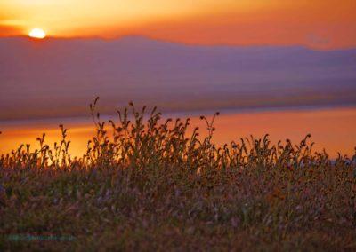 Carrizo Plain Fiddlenecks Sunrise Richard Pradenas