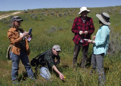 CNPS field trip Carrizo Plain