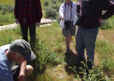 CNPS field trip-Elkhorn Rd-Carrizo Plain2