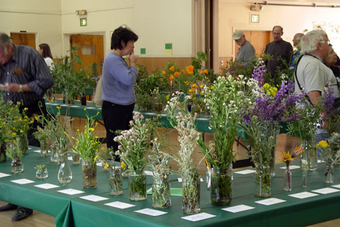 12th Annual Cambria Wildflower Show