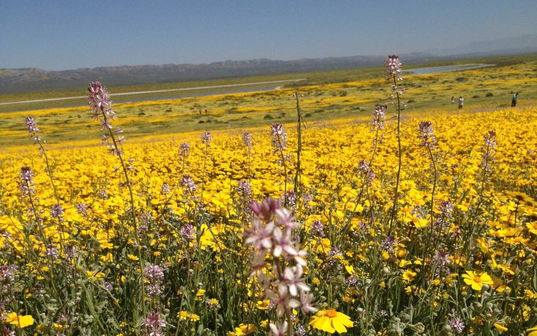 Carrizo Plain April 1 2017