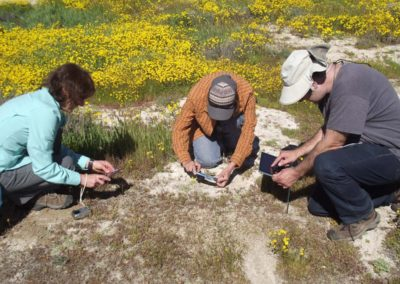 observing soil crust, Belmont Tr Carrizo Plain