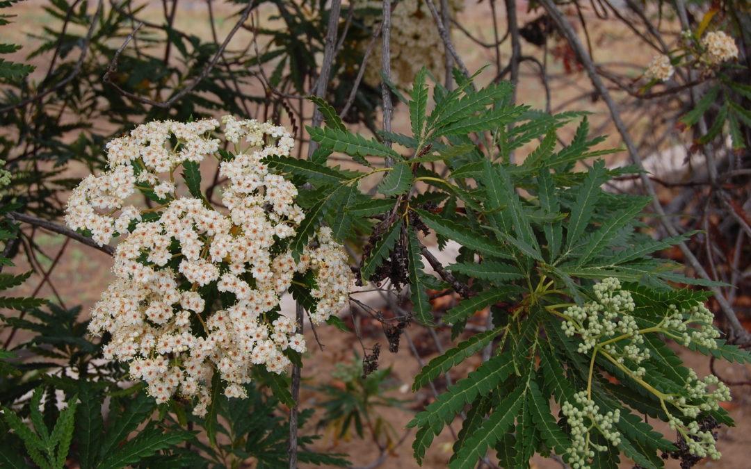 Horticulture Blog
