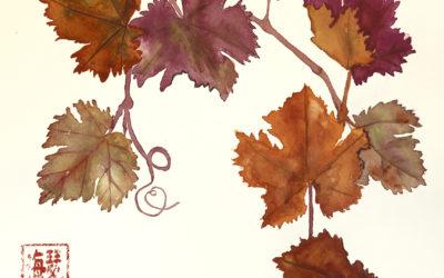 Vitis californica (California grape)