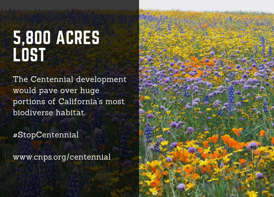 Centennial Development at Tejon Ranch