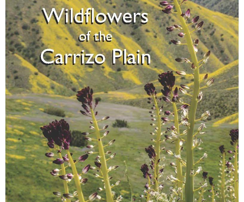 Wildflowers of San Luis Obispo + Wildflowers of the Carrizo Plain