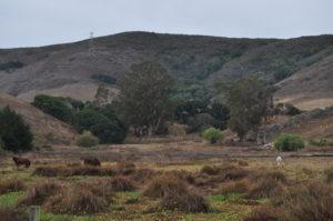Froom Ranch image