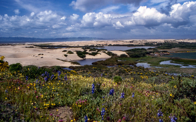 A Few Rare Dune Natural Plant Communities