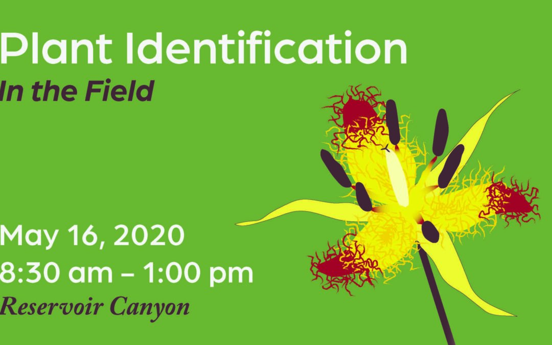 Canceled – Workshop: Plant ID in the Field