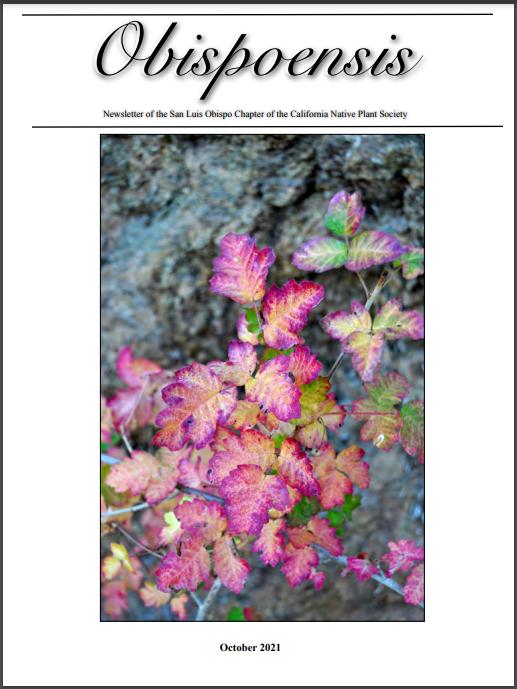 October newsletter cover image